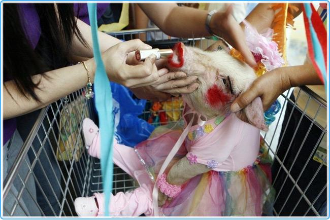 Парад свиней на Филлипинах
