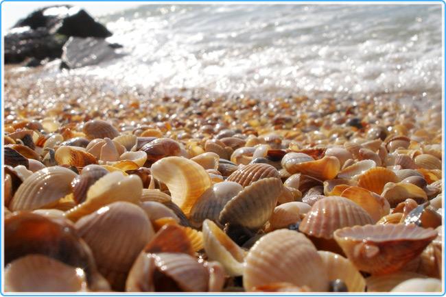 Ракушки на побережье Болгарии