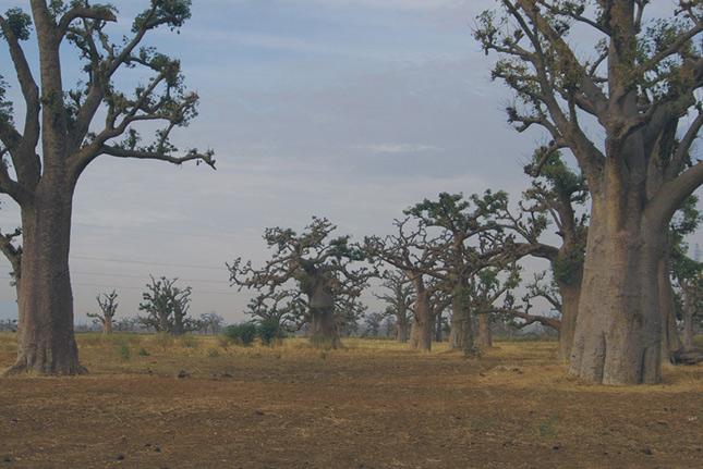 Фото Сенегала