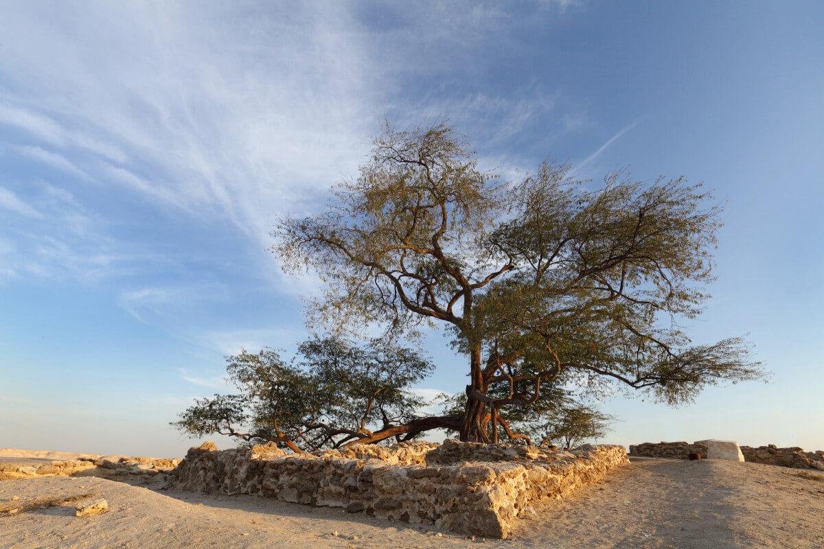 Дерево жизни - Бахрейн